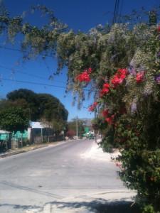 Vibrant, floral street corner in Xpujil